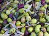 "Coronavirus, Caputo: ""La Sicilia rischia di perdere l'80% di olio extra vergine"""