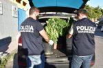 Piazza Armerina, due denunce per coltivazione di marijuana