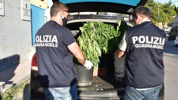 droga, Piazza Armerina, Enna, Cronaca