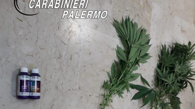 droga, tentato omicidio, Palermo, Cronaca