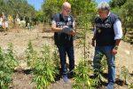 Coltiva marijuana in un fondo agricolo, arrestato a Mussomeli