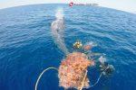 Capodoglio impigliato in una rete a largo di Salina, liberato dalla Guardia Costiera