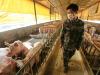 Bimbo di 3 anni ammalato di peste bubbonica, in quarantena una contea della Cina