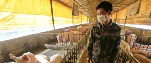 """Nuovo virus dalla Cina, gli esperti: """"Campanello d'allarme, sviluppo imprevedibile"""""""