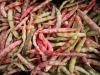 Al via Increase per favorire biodiversità e consumo legumi