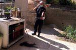 Strage di gatti a Sant'Agata, almeno 10 randagi avvelenati