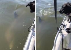 Il delfino sente i cani abbaiare sulla barca ed esce dall'acqua per guardarli La scena girata all'isola di Hope, in Georgia (Stati Uniti) - Corriere Tv