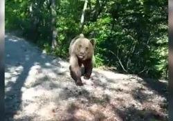 Il video dell'escursionista altoatesino inseguito dal giovane orso Il filmato pubblicato sui social ripreso su un sentiero a Spormaggiore, Trentino - CorriereTV