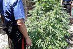 Due chili di marijuana in casa, arrestato a Paternò