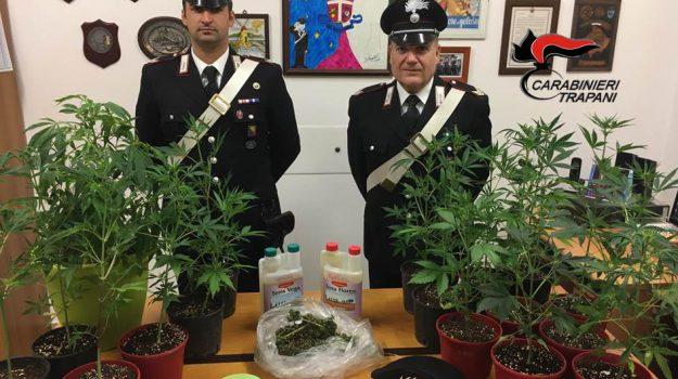 Ventinove piante di marijuana in giardino, arrestato 55enne a Marsala