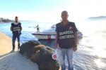 Ricci di mare pescati illegalmente, scatta il sequestro a Torre Faro