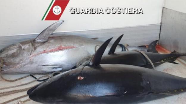 tonno rosso, Messina, Cronaca