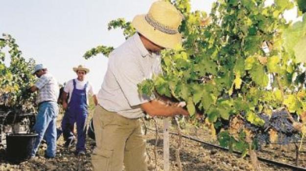 viticoltura, Trapani, Mangiare e bere