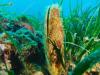Nel Mediterraneo biodiversità a rischio,specie in estinzione