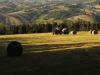 Commissario agricoltura, Recovery fund forte per aree rurali