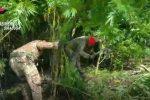 Augusta, sequestrate 200 piante di canapa indiana: due arresti