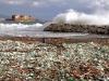 Scampi mangia-plastica, salute e mare a rischio