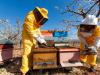 Corte Conti Ue boccia le misure della Commissione per la tutela delle api
