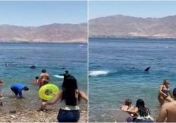 Israele, paura in spiaggia. In mezzo ai bagnanti spunta la pinna di uno squalo Lo squalo balena è apparso nelle acque davanti alla spiaggia della città di Eilat - CorriereTV