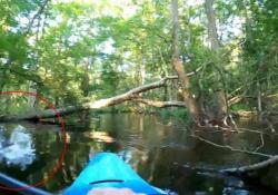 L'alligatore esce all'improvviso dall'acqua e fa ribaltare il kayak La scena filmata in Nord Carolina, negli Stati Uniti  - Dalla Rete