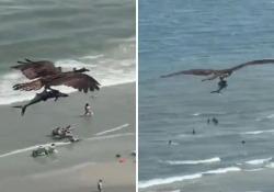 L'aquila cattura un pesce enorme e sorvola la spiaggia: il video è spettacolare La scena ripresa a Myrtle Beach, località balneare in South Carolina (Stati Uniti) - Corriere Tv