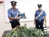 Coltivavano marijuana nel giardino di casa, arrestati due fratelli a Siracusa
