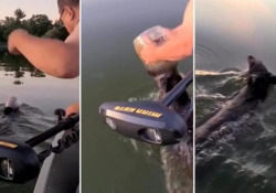 Orso nuota con la testa incastrata in un barattolo di plastica: una famiglia lo libera Avventura per alcuni pescatori in Wisconsin  - Corriere Tv
