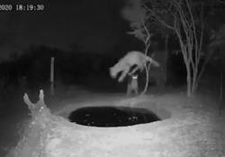 Sudafrica, lo spavento del leopardo sorpreso alle spalle mentre si disseta La scena ripresa da una telecamera a infrarossi - Ansa