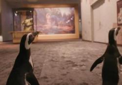 Una notte al museo: i pinguini tra il tirannosauro e il titanosauro I due animali in gita al Field Museum of Natural History di Chicago, chiuso fino per l'emergenza sanitaria - CorriereTV