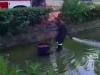 Morti pesci di Villa Sperlinga: per ore in una tinozza per pulire la vasca