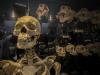 L'uomo moderno conserva le tracce del Dna di ignoti progenitori, comuni a Neanderthal e Denisovani (fonte: Piqsels)