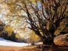 Mipaaf, si arricchisce lelenco degli alberi monumentali