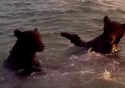 Adorabile: due cuccioli di orso giocano con le onde del mare Il video è stato girato sull'isola di Sakhalin, nella Russia orientale - CorriereTV