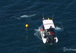 Australia, cucciolo di balena liberato da una rete per gli squali L'intervento a North Stradbroke nei pressi di Brisbane - LaPresse/AP
