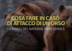 Cosa fare in caso di attacco di un orso: i consigli del National Park Service Non scappare e non calpestare gli amici lenti - Ansa