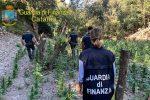Scoperta maxi piantagione di marijuana in provincia di Catania: avrebbe fruttato 2 milioni di euro