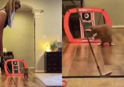 Il gatto è un prodigio in «porta»: il video da milioni di view La clip è stata condivisa su Twitter da Dean Jones, un ex giocatore di cricket australiano - CorriereTV