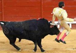 In Spagna torna la corrida: il torero finisce incornato ma si salva Dopo il lockdown, nel Paese sono ripresi i controversi spettacoli - CorriereTV