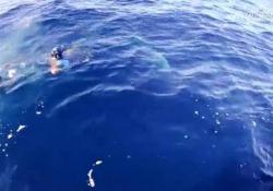 Paura in mare quando un gruppo di sommozzatori viene circondato dagli squali Scappano rapidi sul motoscafo - Corriere Tv