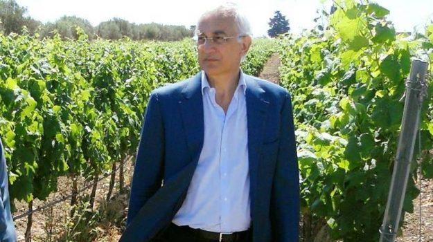 Vino, Sebastiano Di Bella, Sicilia, Politica