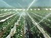 Agricoltura, calcolato il valore dellacqua su scala globale