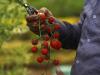 Da Usa altri 14mld di aiuti ad agricoltura, Ue ferma a 80mln