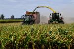 Truffa all'Ue sui contributi agricoli, 15 indagati a Vittoria