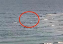Australia: lo squalo insegue il surfista e lo trascina sott'acqua È il primo attacco mortale nella regione della Gold Coast da più di 60 anni - CorriereTV