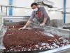Ripresa alimentare a rischio, cercasi tecnici e operai