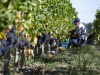 Vino:marchio Fiorano esclusiva principe Boncompagni Ludovisi