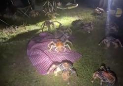 Granchi giganti invadono l'isola di Natale, cercano cibo nel campeggio La sorpresa di una famiglia: l'invasione lungo il percorso della migrazione - Dalla Rete