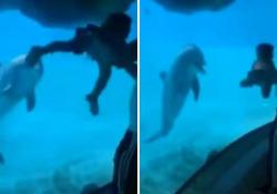 Il padre gioca con la bambina all'acquario, il delfino se la ride Il video del mammifero divertito viene pubblicato centinaia di volte sui social - Dalla Rete