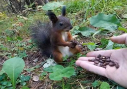 Il video dello scoiattolo che rimane immobile davanti ad una manciata di noci La simpatica clip è diventata virale - CorriereTV