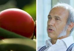 La passata ora si fa «sul campo». Le nuove conserve di Mutti con i pomodori appena colti   - Corriere Tv